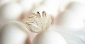 eet-jij-voldoende-eiwitten-Brenda-van-Wegen