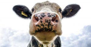 is-melk-goed-voor-elk-Brenda-van-Wegen